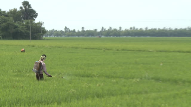Crop Spraying in India