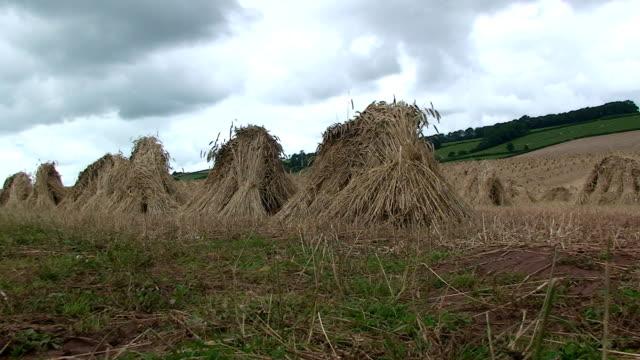 vídeos y material grabado en eventos de stock de cultivo - cultura inglesa