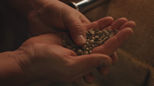 cropped image of owner checking raw coffee beans - quality control stock videos & royalty-free footage