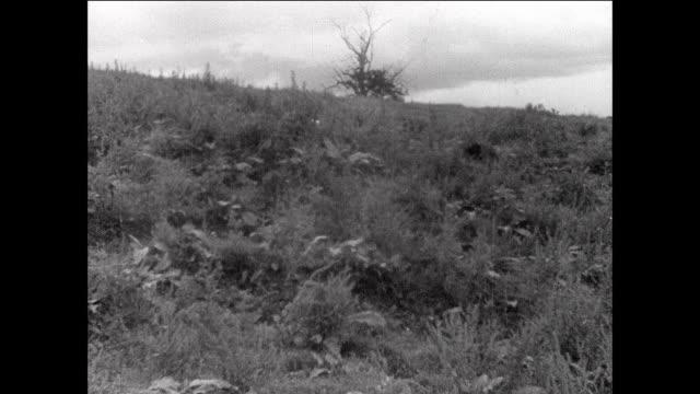 montage crops blowing in the wind / aberystwyth, wales - 1931年点の映像素材/bロール