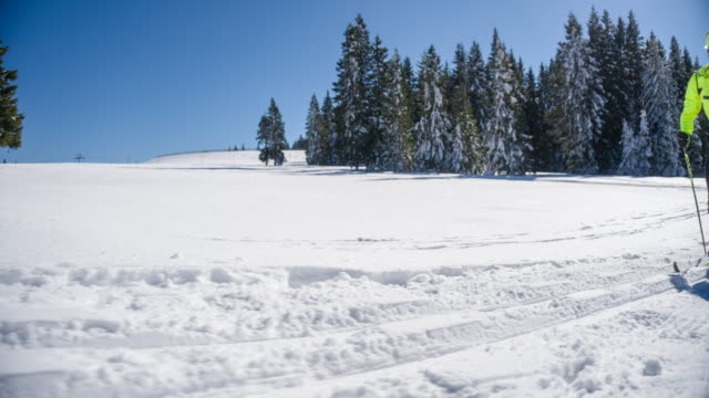 Cross country skier in a winter landscape