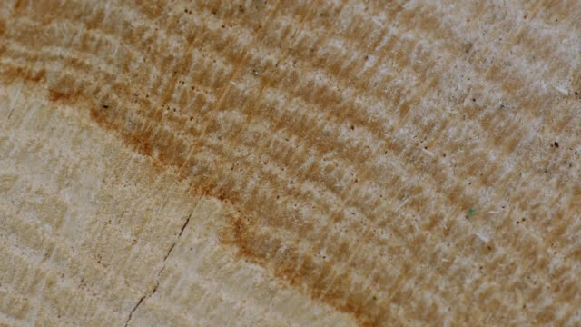 Cross section of a tree trunk with annual rings, Rhineland-Palatinate, Germany, Europe
