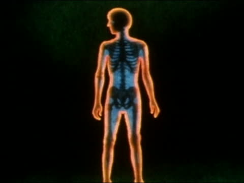 1982 ANIMATION cross section of young man aging / skeleton visible