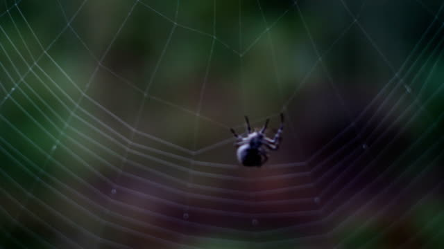 cross spider web weaving - spider web stock videos & royalty-free footage