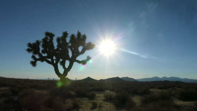 cross time-lapse - joshua tree stock videos and b-roll footage