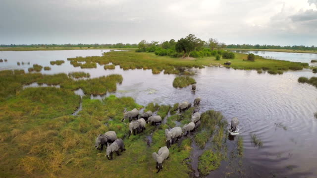 crossing the majestic african landscape - herd stock videos & royalty-free footage