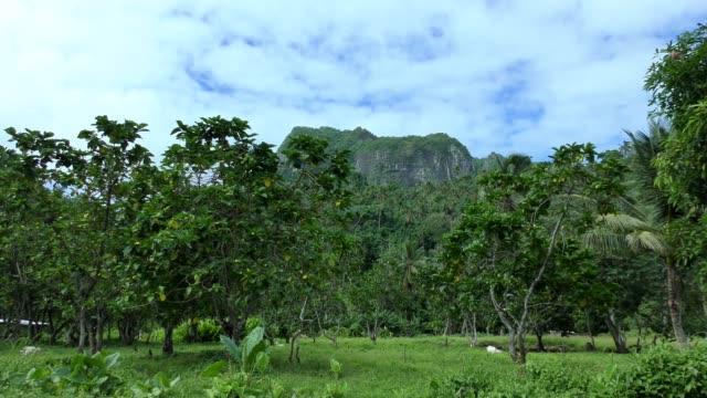cross-island track - rarotonga, cook islands - rarotonga stock videos & royalty-free footage