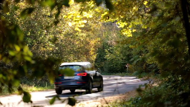 crossover rides along the forest road. - off road car stock videos and b-roll footage