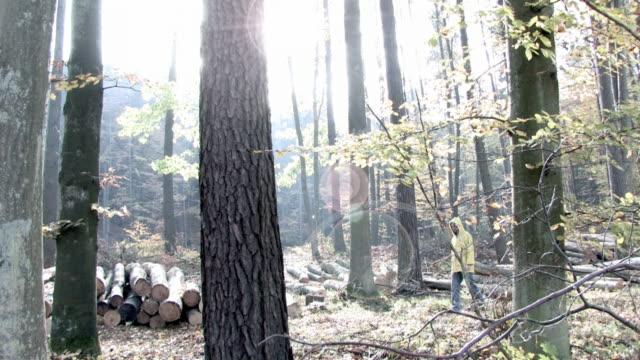 vídeos de stock, filmes e b-roll de encruzilhada na floresta em alta definição - parélio