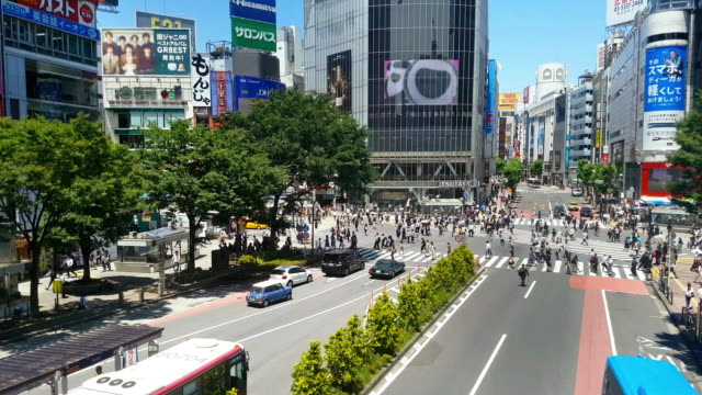 crow crossing road on the day at shibuya cross - poster stock videos & royalty-free footage