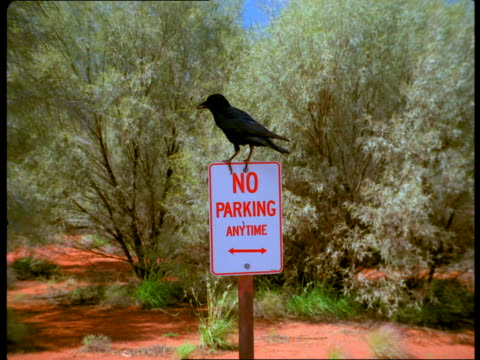 a crow perches on top of a no parking anytime sign. - no parking sign stock videos & royalty-free footage
