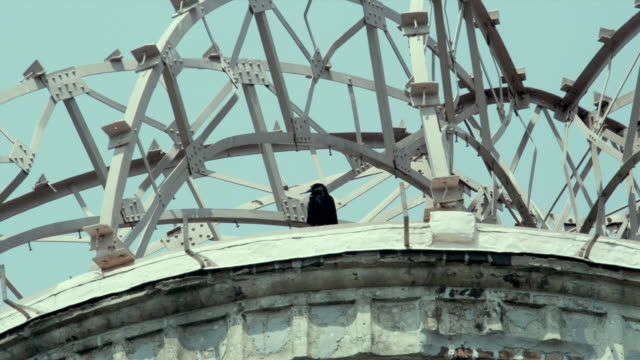 vidéos et rushes de cu la crow sitting in hiroshima peace memorial (commonly called atomic bomb dome or a-bomb dome) against clear sky, hiroshima peace memorial park, hiroshima, japan - hiroshima prefecture