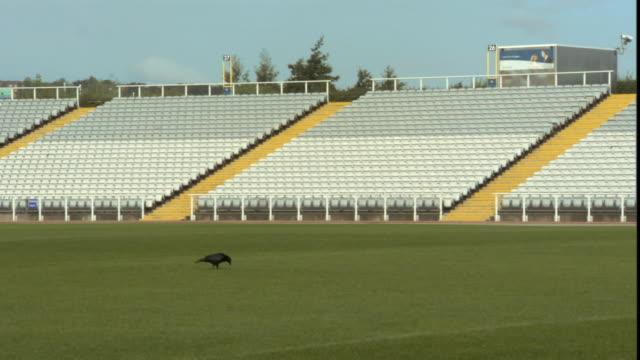 ws crow walking around sports field in empty stadium/ sheffield, england - steps stock videos & royalty-free footage