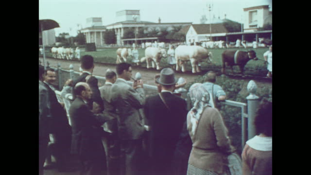 1959 crowd enjoys livestock judging at moscow exhibition - former soviet union stock videos & royalty-free footage