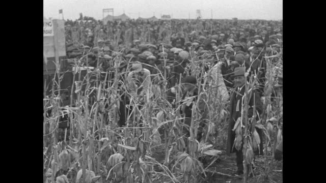 crowd gathers on minnesota farm for cornhusking contest / tractor pulls trailer wagon through crowd / denuded cornstalks stand in foreground as... - husking stock videos & royalty-free footage