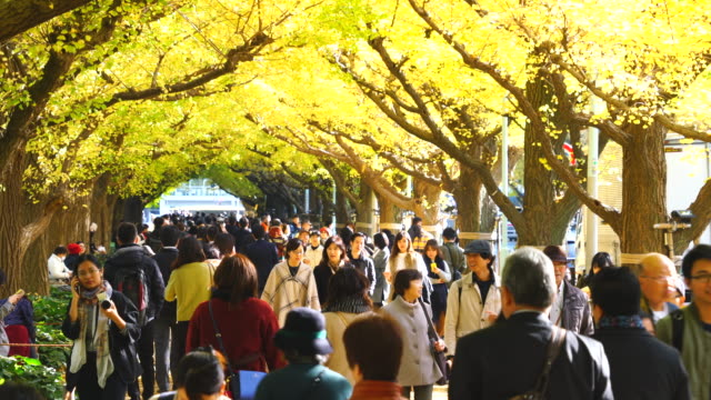 crowd is walking through the ginkgo tree avenue under the rows of autumn leaves in jingu gaien, chhiyoda ward, tokyo japan on november 17 2018. rows of glowing autumn leaves ginkgo trees surround the avenue and people. - ginkgobaum stock-videos und b-roll-filmmaterial