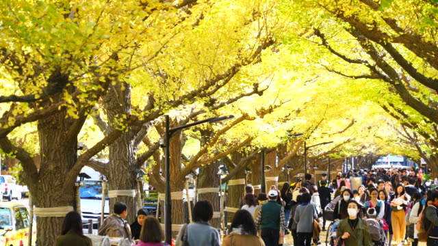 crowd is walking through the glowing ginkgo tree avenue under the rows of autumn leaves in jingu gaien, chhiyoda ward, tokyo japan on november 16 2017. rows of autumn leaves surround the avenue and people. - ginkgobaum stock-videos und b-roll-filmmaterial