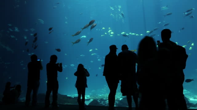 ms crowd looking at fish tank in aquarium / atlanta, georgia, united states - 水族館点の映像素材/bロール