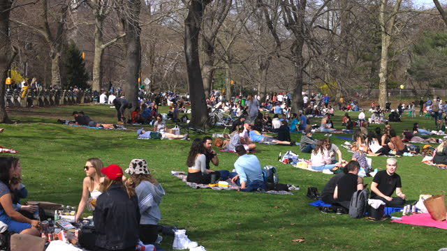 a crowd of people relaxes on the lawn in central park amidst the pandemic of covid-19 nyc. - tree trunk stock videos & royalty-free footage