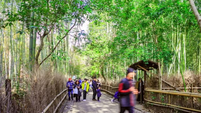 crowd of traveler people walking at arashiyama bamboo forest with nature scean in kyoto, japan - bamboo plant video stock e b–roll