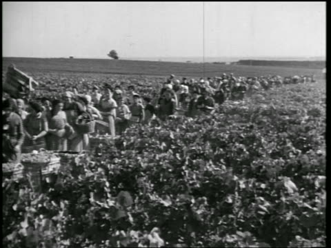 B/W 1933 crowd of women walking in rows of vineyard for grape-picking / Champagne, France / newsreel