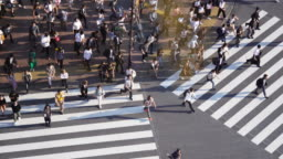 Crowd people crossing zebra crossing at Shibuya, Tokyo, Japan.