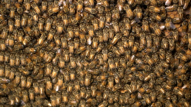 A crowded beehive