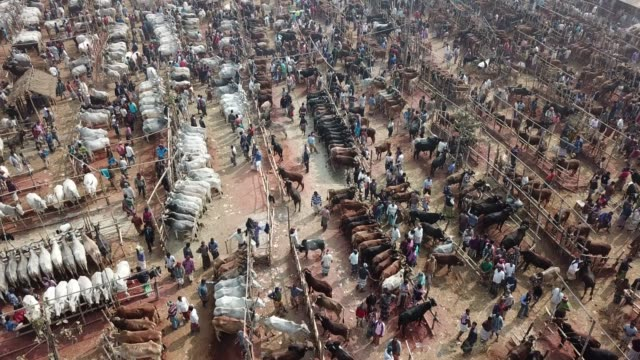 crowded cattle market in bangladesh. - livestock stock videos & royalty-free footage