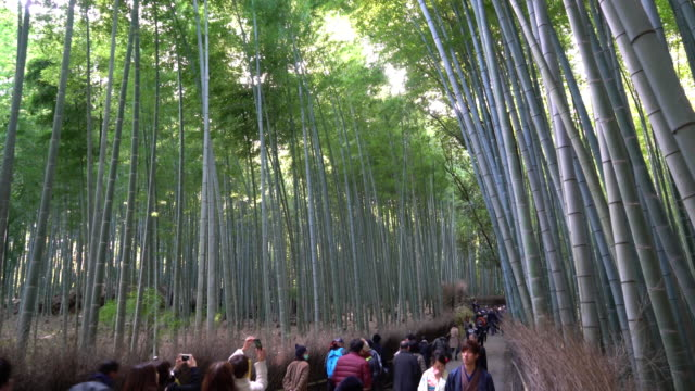 crowded people at bamboo forest in Arashiyama