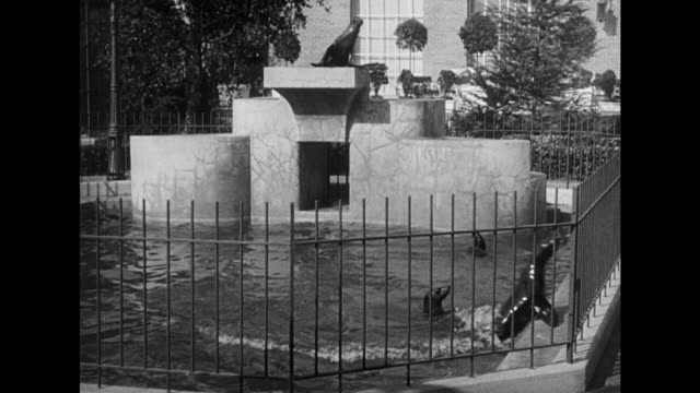 1948 a crowded zoo on a sunny day with sea lions playing in the water - film noir style stock videos & royalty-free footage