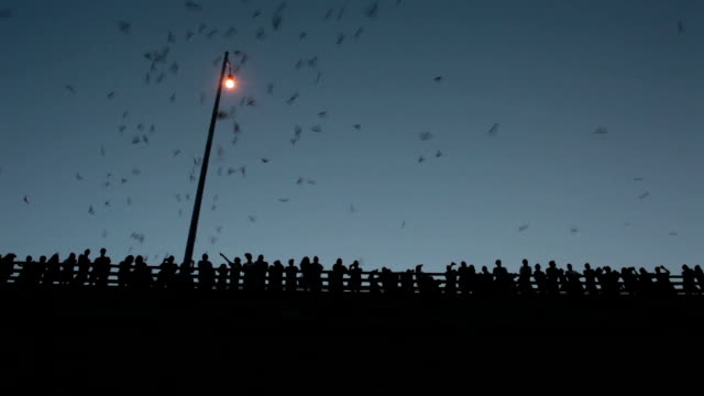 Crowds of people watch Mexican free-tailed bats Austin Texas