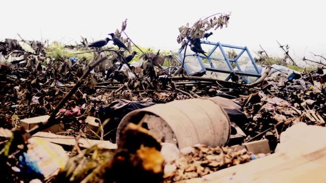 crows auf der müllkippe - öde landschaft stock-videos und b-roll-filmmaterial