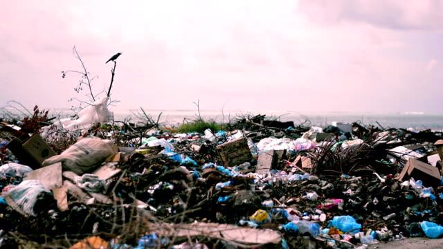 crows on garbage dump - polystyrene stock videos & royalty-free footage