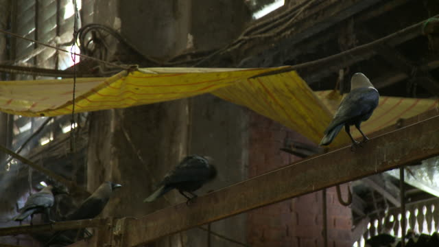 Crows perch on beams at an outdoor market.