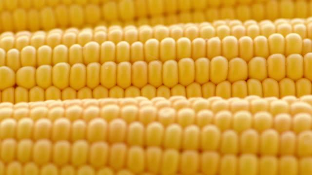 原油-トウモロコシ - 野菜 とうもろこし点の映像素材/bロール