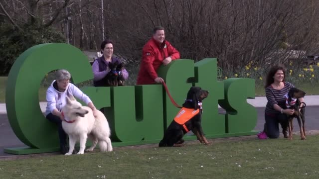 crufts 2019 launches with a photocall at the nec in birmingham three new breeds have been introduced this year russian toy white swiss shepherd and... - crufts hundezuchtschau stock-videos und b-roll-filmmaterial