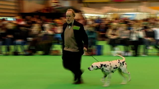 betting allegations graham sharpe interview sot dalmations in judging ring poodles being groomed caroline kisko interview sot husky dogs in judging... - crufts hundezuchtschau stock-videos und b-roll-filmmaterial