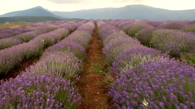 cruising through lavender - young couple stock videos & royalty-free footage
