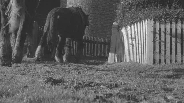 vídeos de stock, filmes e b-roll de montage crumbling and abandoned farms being put to the torch / united kingdom - grupo pequeno de animais