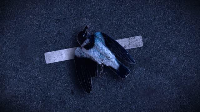 交通渋滞で押しつぶされた動物 - 死んでいる動物点の映像素材/bロール