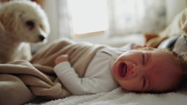 gråtande nyfödd bebis som ligger på sängen med sin hund - endast en pojkbaby bildbanksvideor och videomaterial från bakom kulisserna