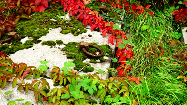 crypt with creeper plant in autumn - crypt stock videos and b-roll footage