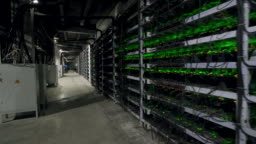 Cryptocurrency mining equipment on large farm. ASIC miners on stand racks mine bitcoin in server room. Blockchain techology application specific integrated circuit. Steadycam footage along racks