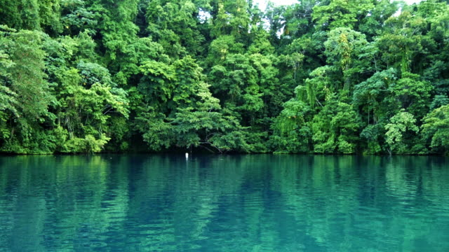 crystal clear lagoon in the jungle - jamaica stock videos & royalty-free footage