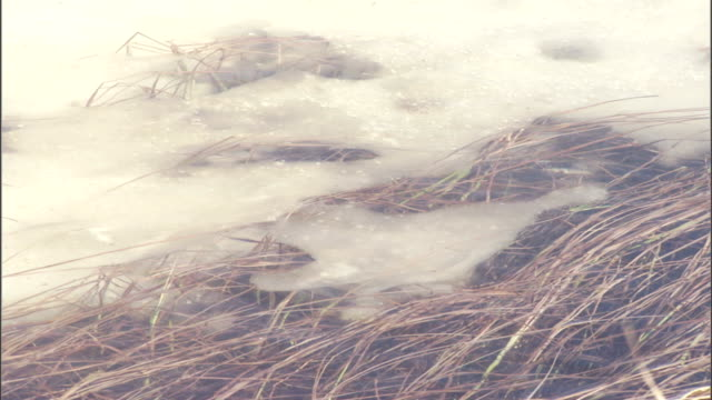 vídeos de stock, filmes e b-roll de crystal clear water reveals submerged ice and grass. - ice crystal