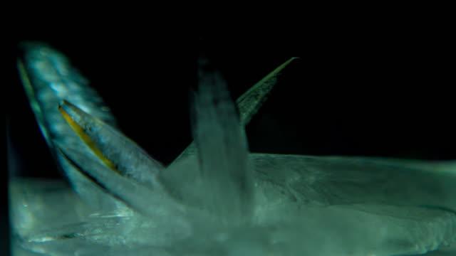 crystal growth concept: tid förfaller - kristall bildbanksvideor och videomaterial från bakom kulisserna