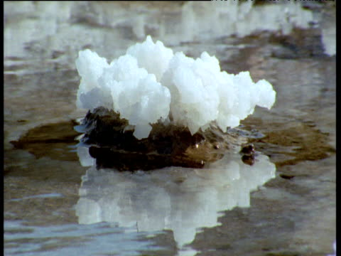 crystal of salt on stone in lake - salt mineral stock videos and b-roll footage