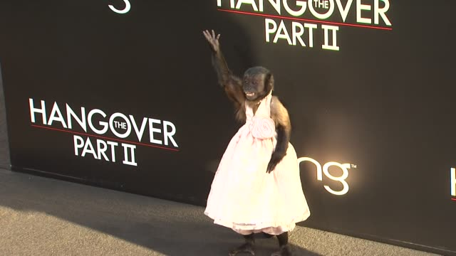 stockvideo's en b-roll-footage met crystal the capuchin monkey at the 'the hangover part ii' premiere at hollywood ca - première