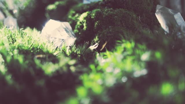 苔の上に横たわる結晶 - クリスタル点の映像素材/bロール