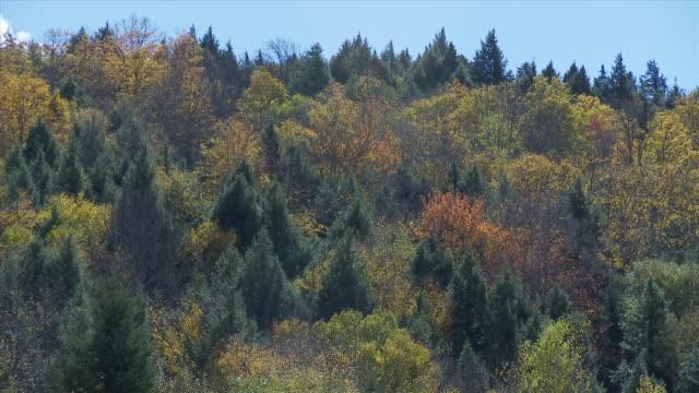 Cu Fall Trees